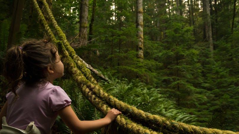 Perdue dans la jungle pendant 5 jours, une enfant de 4 ans retrouvée saine et sauve