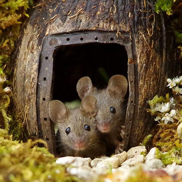 [Adorable] Il construit un village pour les souris de son jardin !