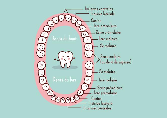 dents des enfants