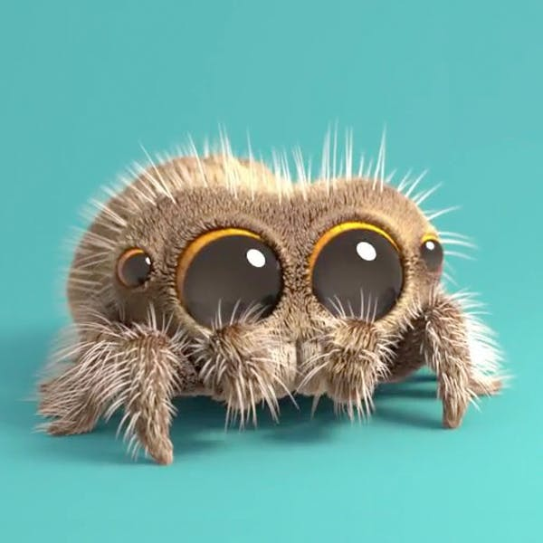 Des nouvelles de Lucas, l'araignée la plus mignonne du monde