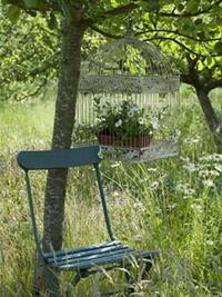 chaise sous un arbre