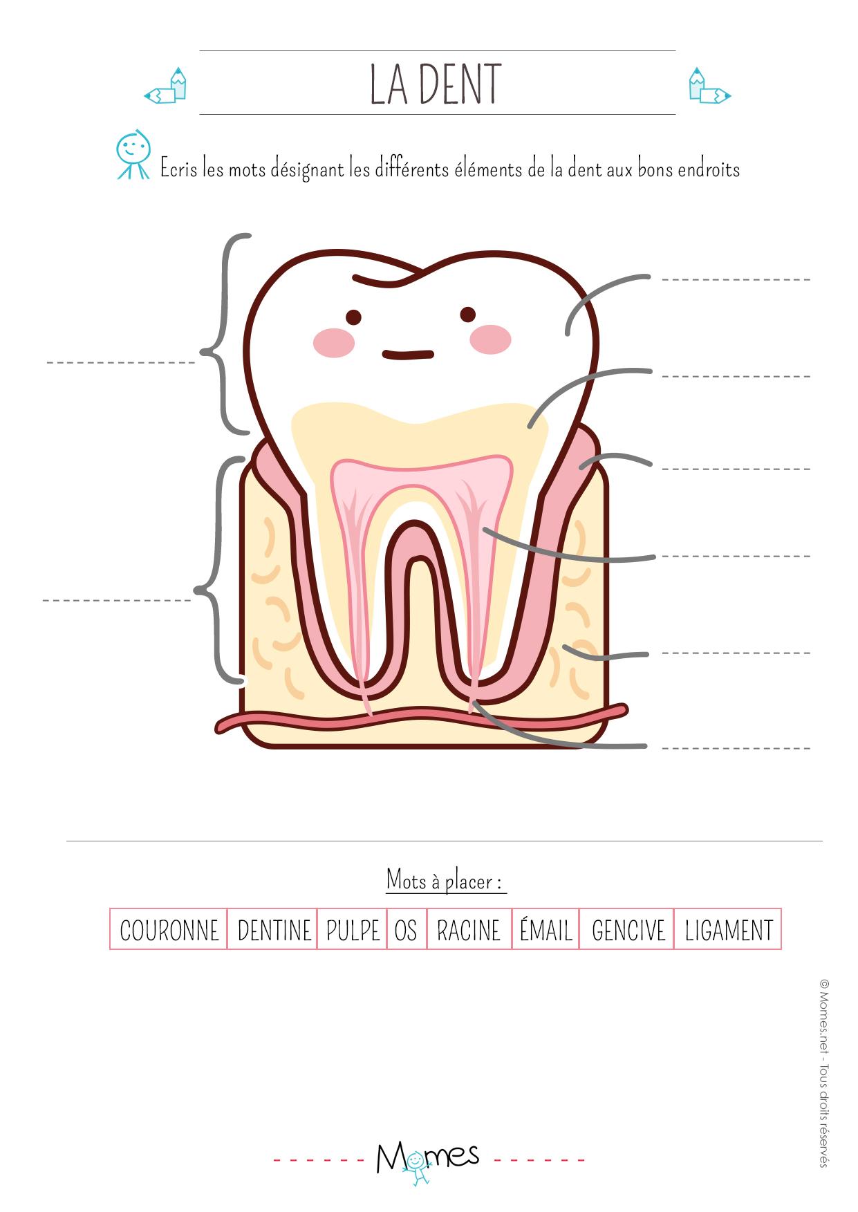 Exercice : la dent - Momes.net