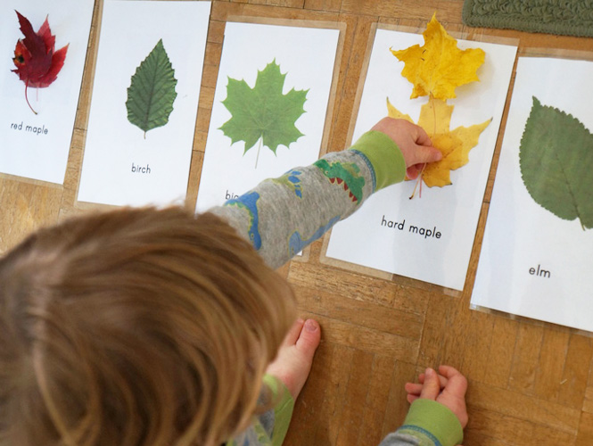 fabriquer des cartes pour reconnaitre les diff rentes feuilles d arbre. Black Bedroom Furniture Sets. Home Design Ideas