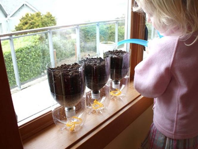 faire pousser des plantes dans une bouteille en plastique. Black Bedroom Furniture Sets. Home Design Ideas