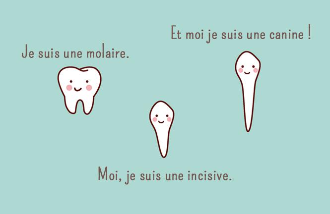 formes dents