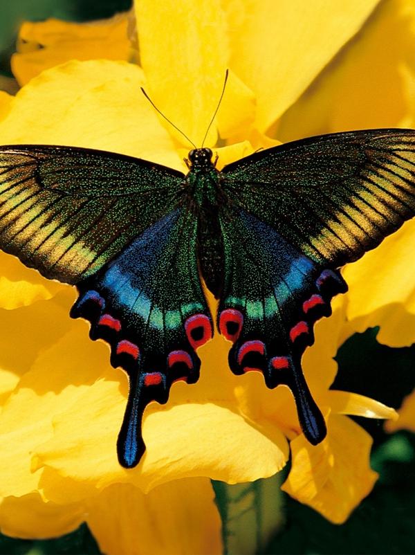 Je d couvre le papillon - Images de papillon ...