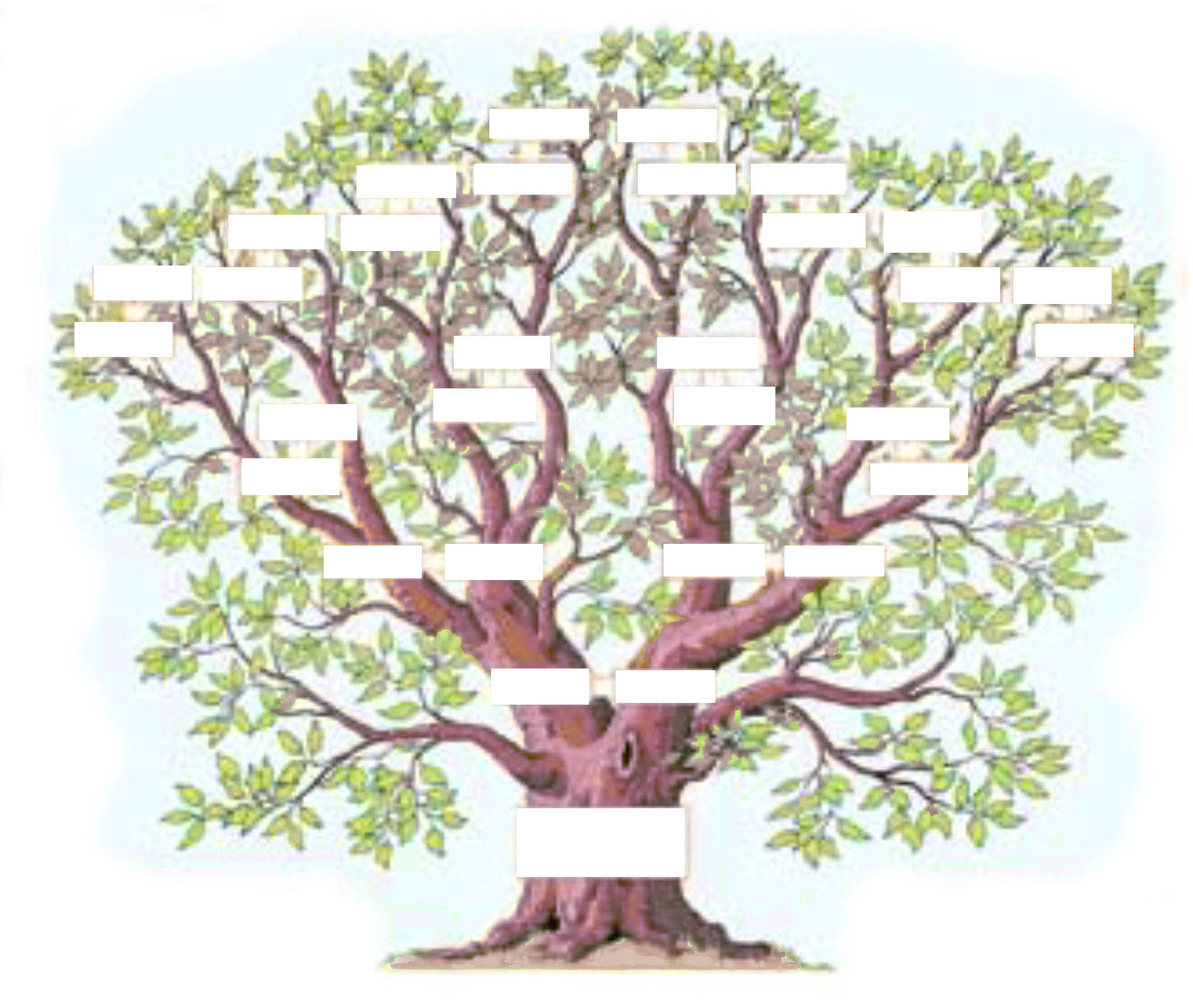 L'arbre généalogique