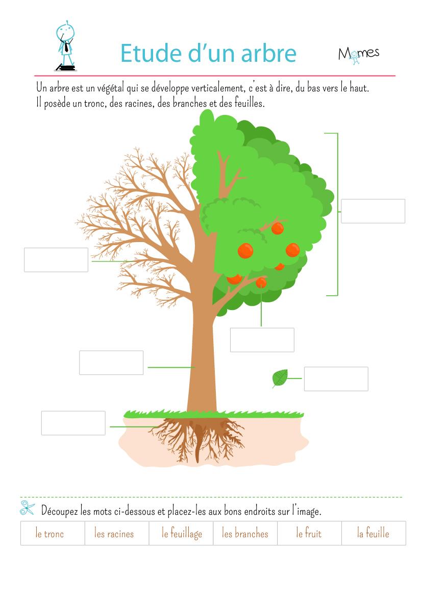 L 39 tude d 39 un arbre - L arbre le pommier ...