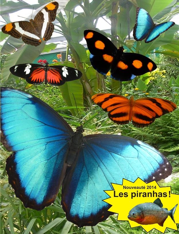 Image L'île aux papillons