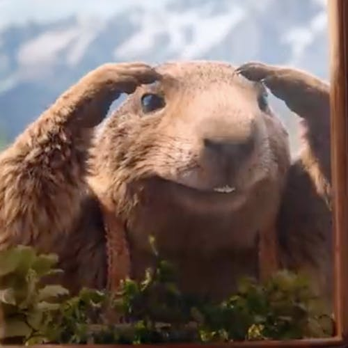 La marmotte Milka est de retour !