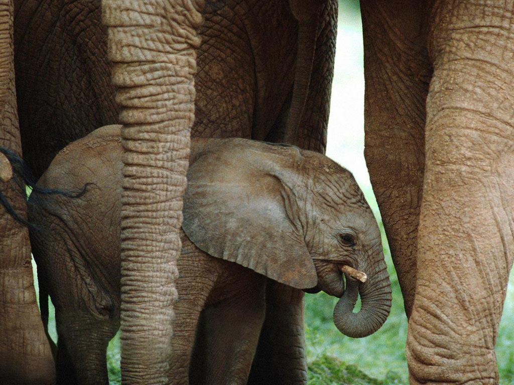 Le Bébé éléphant Momesnet