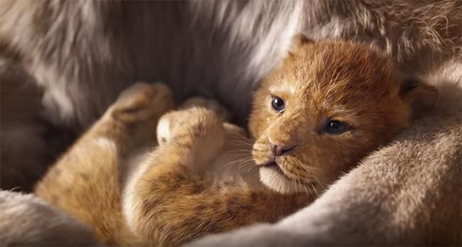 Le Roi Lion Momes Net