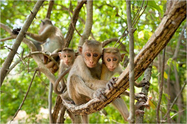 le royaume des singes