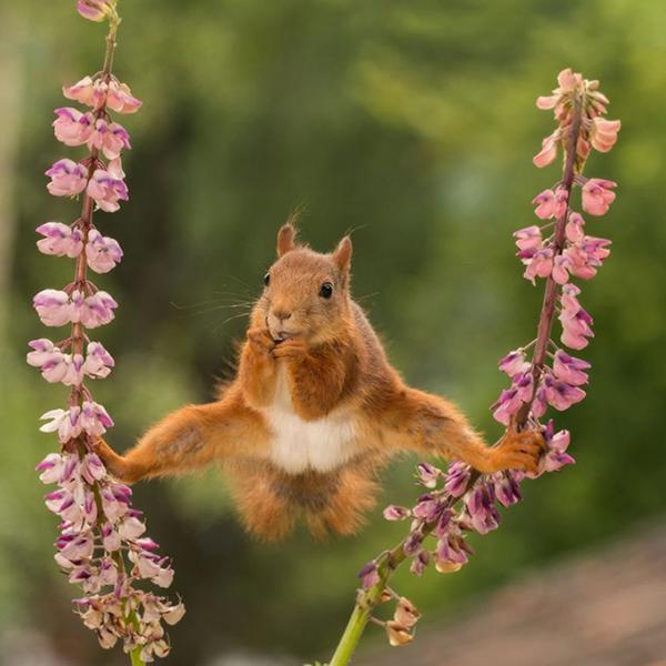 Les photos d'animaux les plus drôles de l'année !
