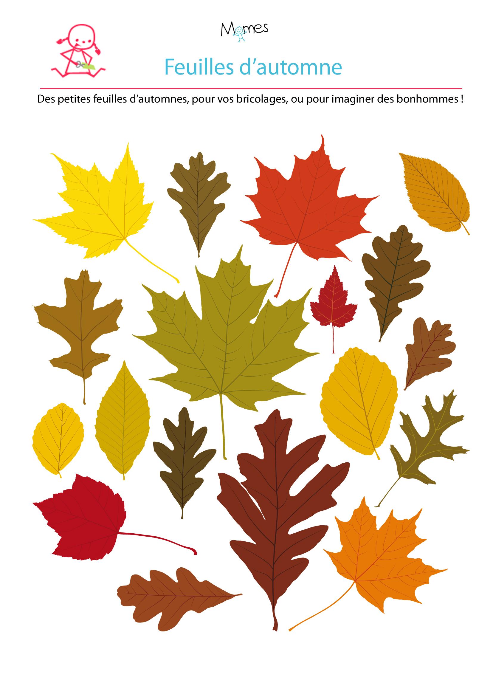 Mod le de feuille d 39 automne - Bricolage feuille d automne ...