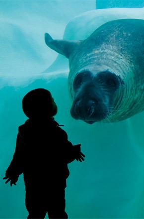 Image Musée de la Mer Aquarium de Biarritz
