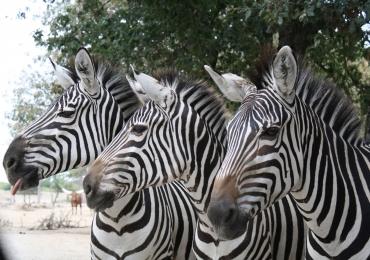 Parcs zoologique : African Safari