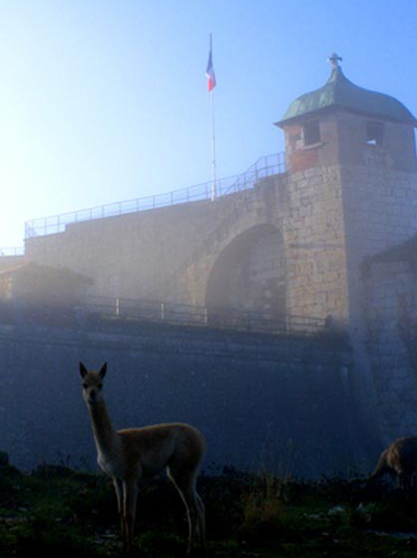Parcs zoologique : La citadelle de Besançon