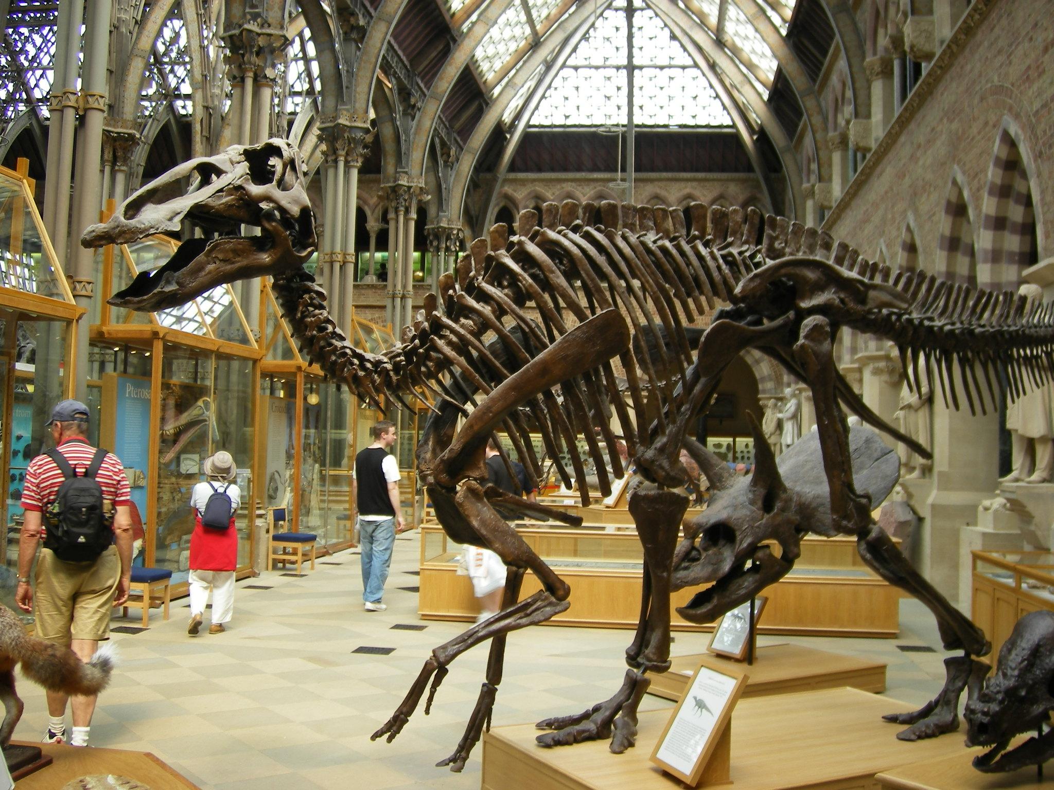 Photo d'un squelette de dinosaure au Musée d'histoire naturelle d'Oxford
