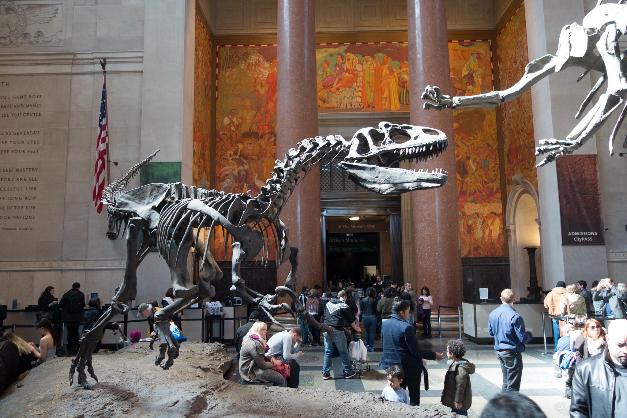 Photo d'un squelette de Velociraptor au Musée d'histoire naturelle de New-York