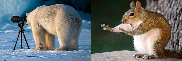 Les photos d'animaux les plus drôles de l'année ! - Momes.net