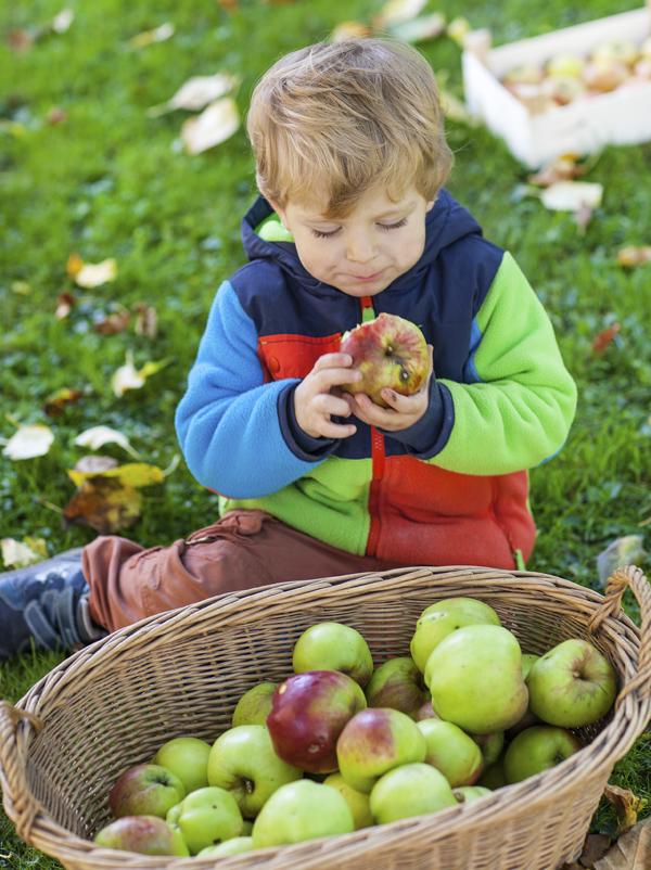 Comptine Pomme, poire pêche, abricot