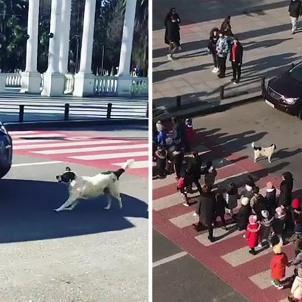 chien kupata aide les enfants à traverser la rue