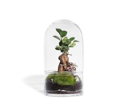 Un terrarium