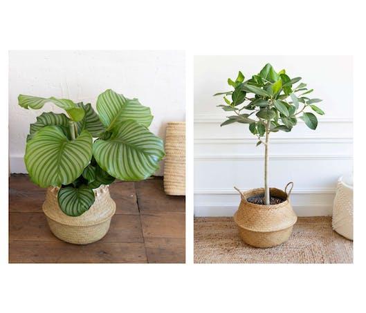 Une belle plante verte