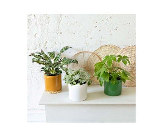 Plusieurs petites plantes