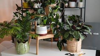 #Décoration : 8 idées pour végétaliser son intérieur