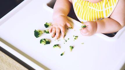 Alimentation de bébé : quand et comment introduire les morceaux ?