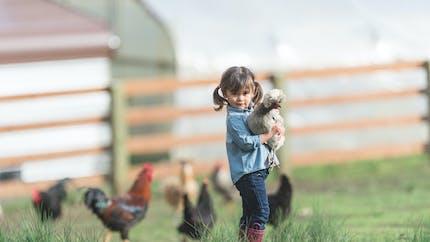 Crèches : Lyon va les végétaliser avec des poulaillers et des potagers