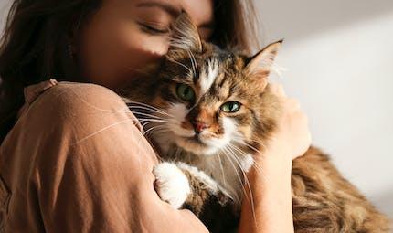 Covid-19 : il pourrait se transmettre de l'Homme au chat