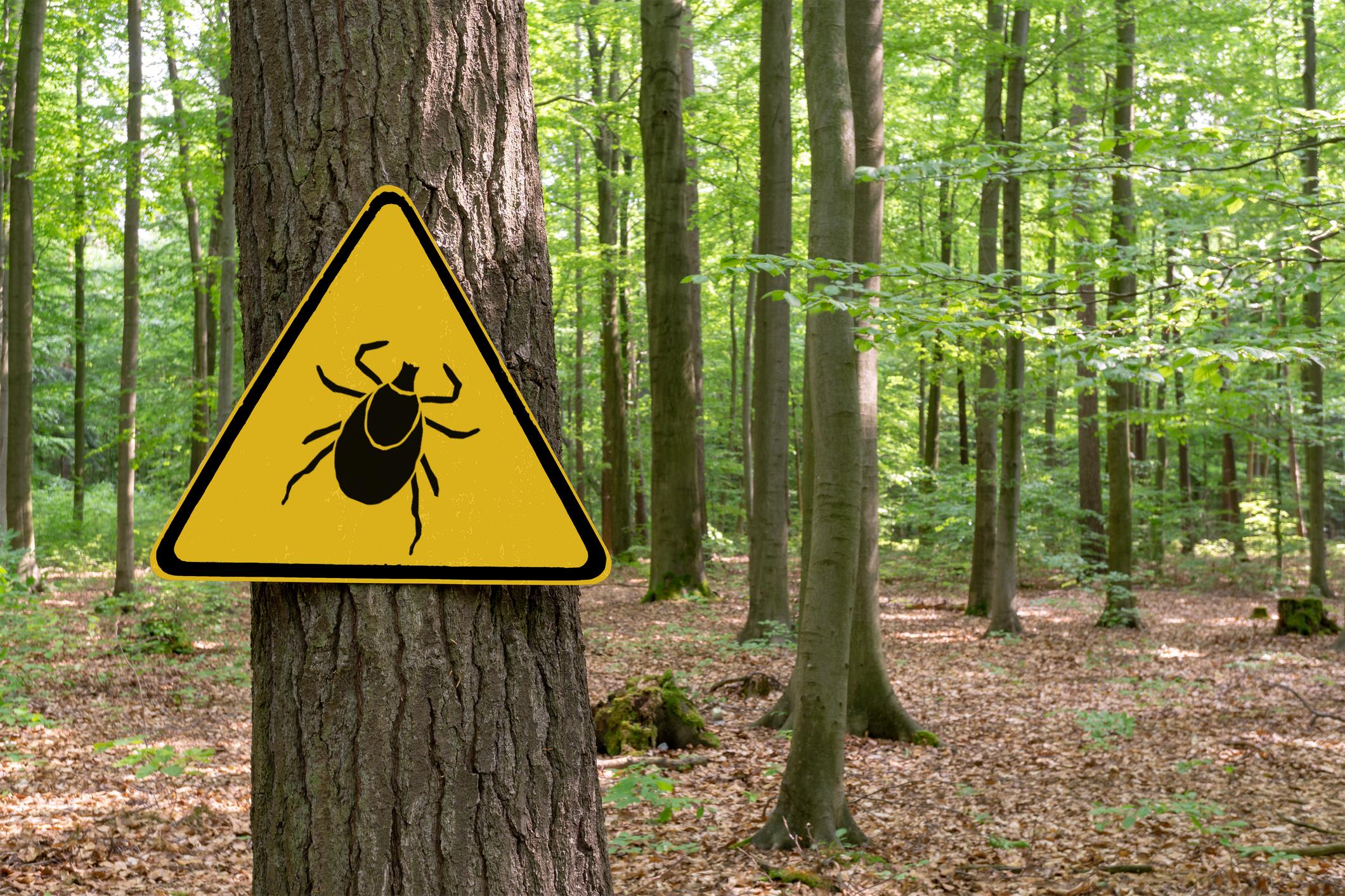 Se protéger des tiques : tout savoir sur cet acarien