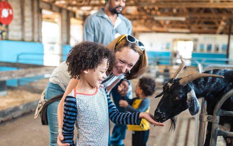 enfant souriant avec ses parents dans une étable tend la main à une vache
