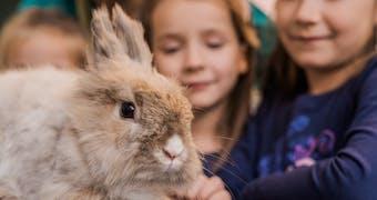 « Comment j'ai adopté un lapin sur Le Bon Coin »