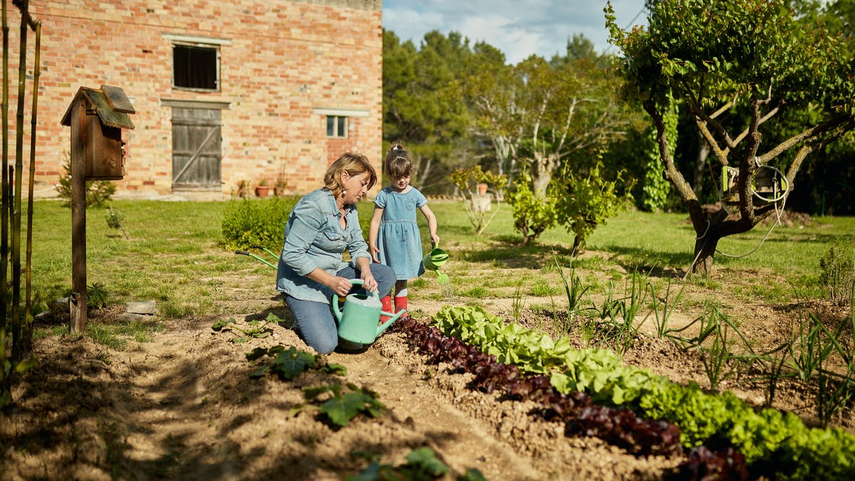Maman et fille arrosent le potager dans le jardin
