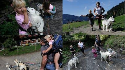 La cani-rando ou les chiens de traîneaux... en été