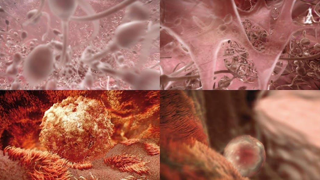 Le fœtus en images : évolution du foetus mois par mois