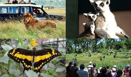 Top 13 des plus beaux zoos de France